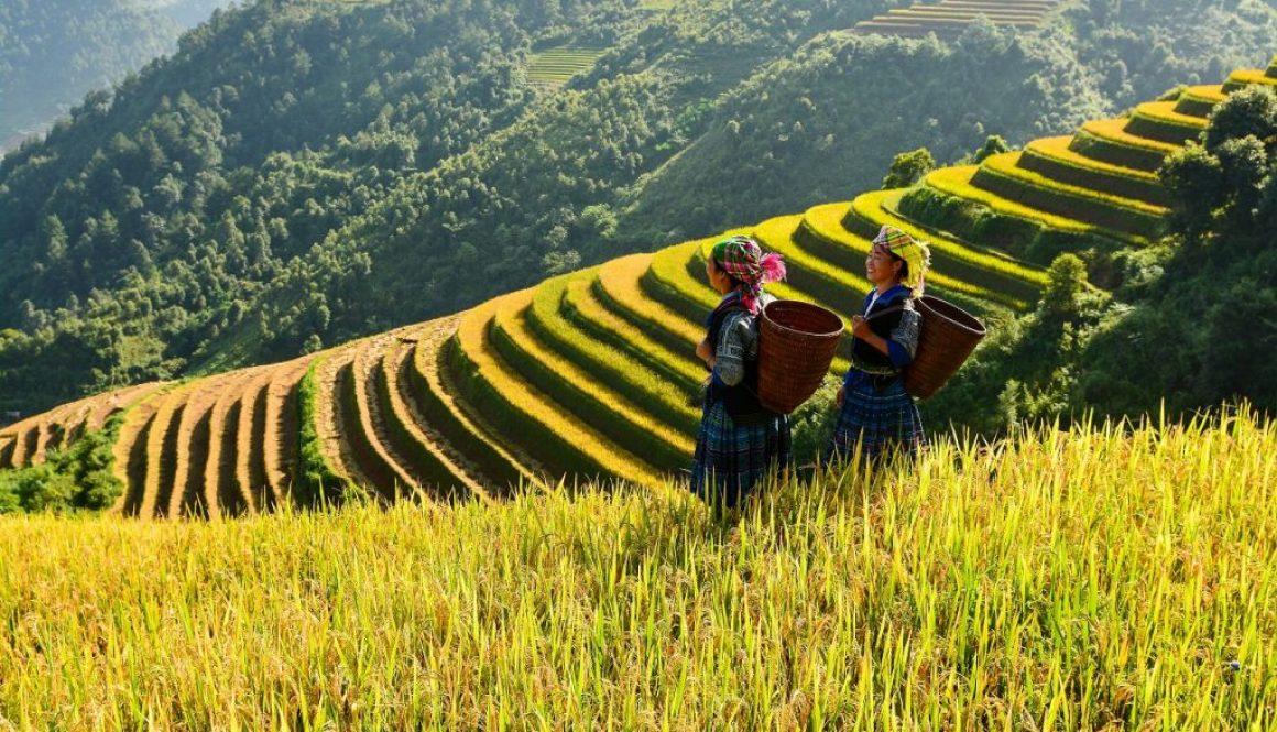 Dovoz z Vietnamu_dovoz tovaru z vietnamu cez Infinity Standard
